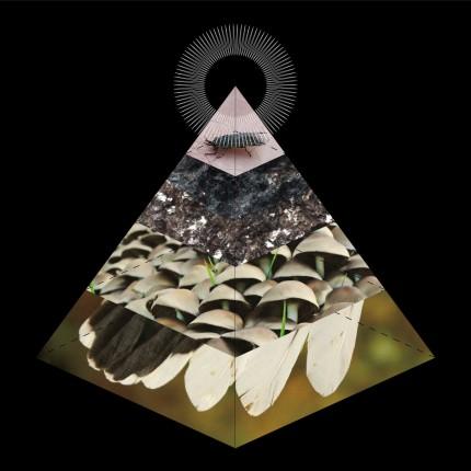 Bellus - Apophenia LP
